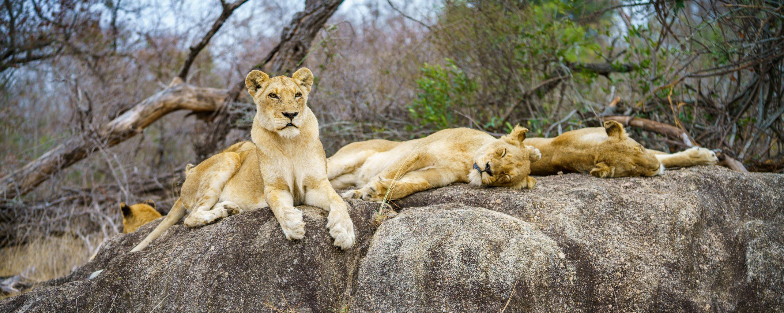 Ben jij van plan om naar Tanzania te gaan? Bekijk de big five!